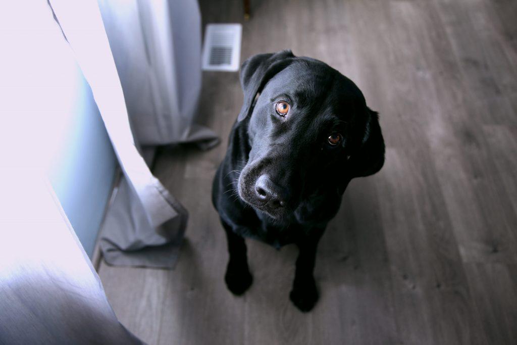 嗅覚鋭い犬